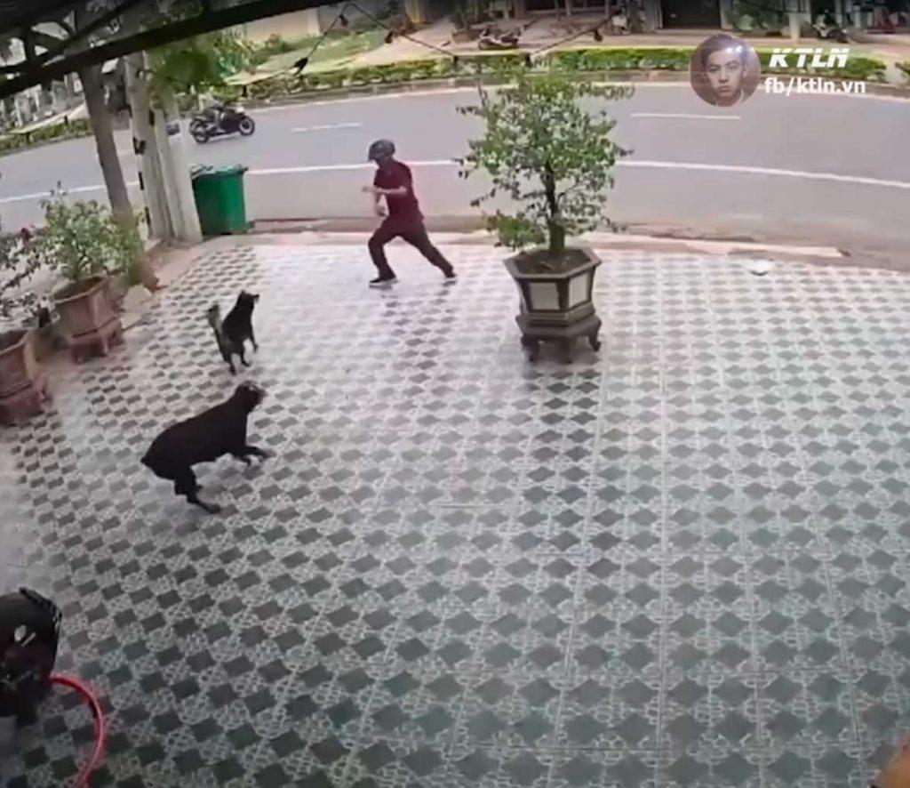 Se defiende de dos perros y se vuelve viral