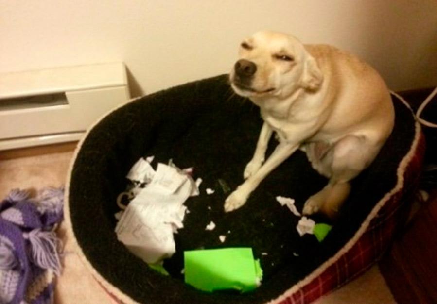 Mi perro se comió mi tarea